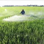 Nhiều mô hình nổi bật trong tái cơ cấu nông nghiệp