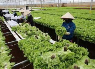 Đổi mới tư duy, phát huy năng lực trong sản xuất nông nghiệp