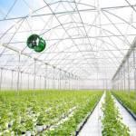 Đầu tư nông nghiệp công nghệ cao: Thách thức không chỉ cần 'vốn dày'