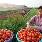 Hợp tác xã là mô hình kinh tế chủ lực của nông nghiệp, nông thôn