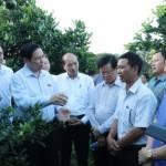 Thủ tướng: 'Cần chuyển tư duy sản xuất nông nghiệp sang kinh tế nông nghiệp'