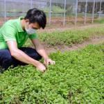 Nông nghiệp trách nhiệm nhìn từ sức khỏe cây trồng