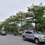 Bắt Tổng Giám đốc Cty Cây xanh Hà Nội vì 'thổi giá' cây, gây thiệt hại 30 tỷ đồng