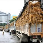 Nông sản Việt khó cạnh tranh tại Trung Quốc