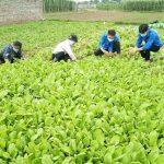 Bài 1: Lúng túng tiêu thụ nông sản